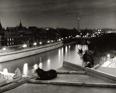 Paris, Cats at Night