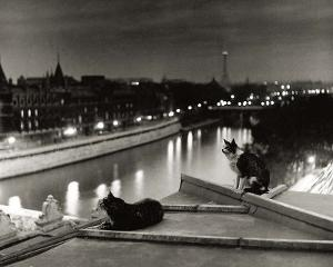 Paris, Cats at Night by Robert Doisneau