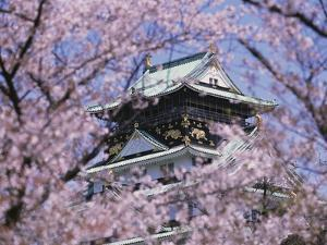 Cherry Blossoms in Front of Osaka Castle by Robert Essel