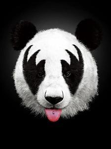 Panda Rocks by Robert Farkas