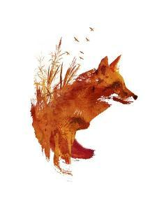 Plattensee Fox by Robert Farkas