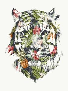 Tropical Tiger by Robert Farkas