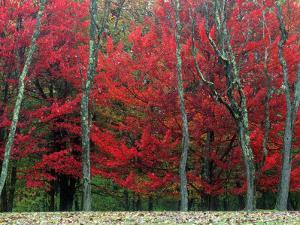 Autumn in West Virginia by Robert Finken
