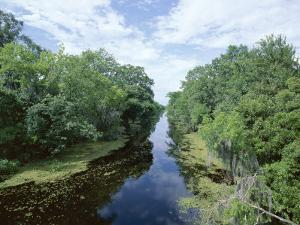 Bayou in Swampland at Jean Lafitte National Historic Park and Preserve, Louisiana, USA by Robert Francis