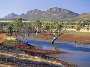 Gum Trees in a Billabong, Flinders Range National Park, South Australia, Australia by Robert Francis
