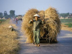 Man with Freshly Harvested Rice on Cart in the Ricefields of Bac Thai Province by Robert Francis