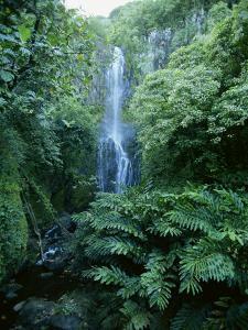 One Hundred Foot Wailua Falls Near Oheo, Hana Coast, Maui, Hawaii, USA by Robert Francis