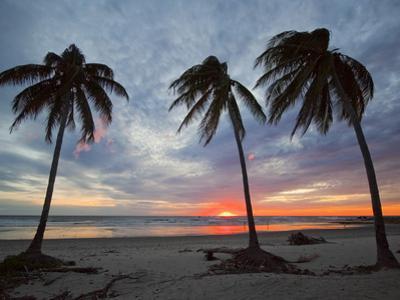 Playa Guiones Beach, Nosara, Nicoya Peninsula, Guanacaste Province, Costa Rica by Robert Francis