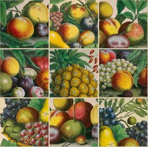Composition of Fruits by Robert Furber
