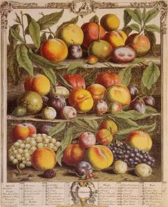 Fruits of the Season, Autumn by Robert Furber