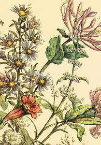 Furber Flowers IV - Detail by Robert Furber