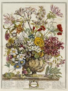 Hand Colored Engraving of Bouquet- October, 1730 by Robert Furber