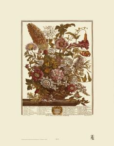 Twelve Months of Flowers, 1730, August by Robert Furber