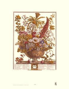 Twelve Months of Flowers, 1730, December by Robert Furber