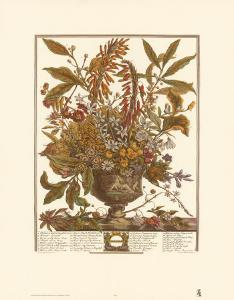 Twelve Months of Flowers, 1730, January by Robert Furber