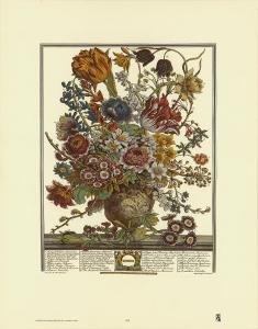 Twelve Months of Flowers, 1730, March by Robert Furber