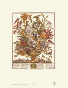 Twelve Months of Flowers, 1730, September by Robert Furber