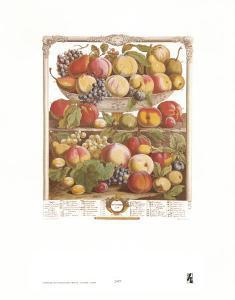 Twelve Months of Fruits, 1732, September by Robert Furber