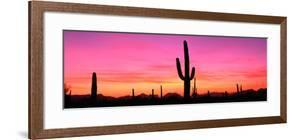 Usa, Arizona, Organ Pipe National Monument, Sunset by Robert Glusic