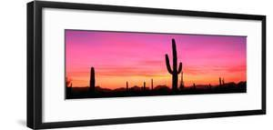 Usa, Arizona, Organ Pipe National Monument, Sunset by Robert Glusic