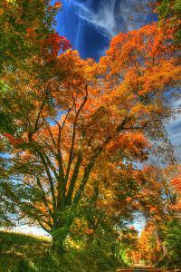 Autumn Borden Road Vertical by Robert Goldwitz