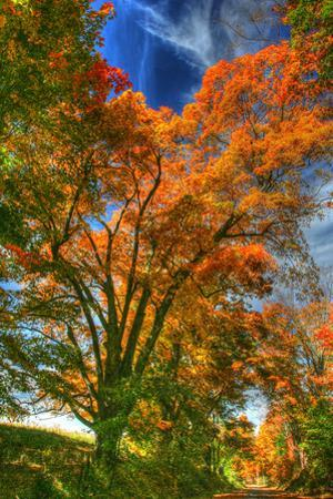 Autumn Borden Road Vertical by Robert Goldwitz