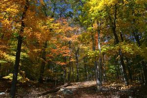 Autumn Clearing by Robert Goldwitz
