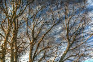Bare Branches 1 by Robert Goldwitz
