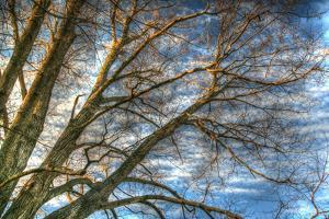 Bare Branches 2 by Robert Goldwitz