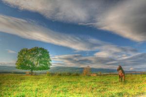 Big Sky Paddock by Robert Goldwitz