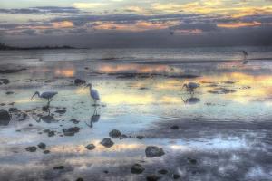Bird Dawn 2 by Robert Goldwitz