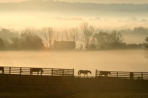 Blue Chip Horse Farm Golden Morning by Robert Goldwitz
