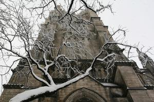 Branch Snow Cathedral by Robert Goldwitz