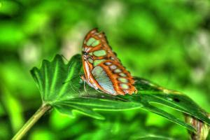 Butterfly 10 by Robert Goldwitz