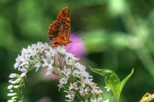 Butterfly 12 by Robert Goldwitz