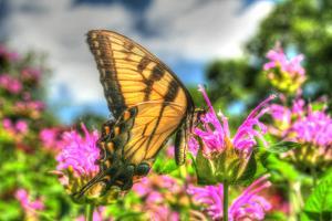 Butterfly 13 by Robert Goldwitz