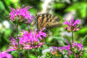 Butterfly 14 by Robert Goldwitz