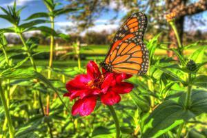 Butterfly 15 by Robert Goldwitz