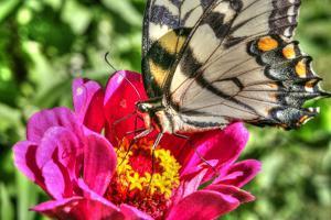 Butterfly 17 by Robert Goldwitz