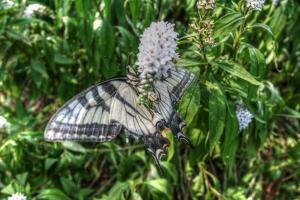 Butterfly 19 by Robert Goldwitz
