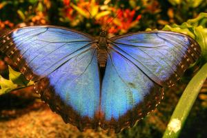 Butterfly 20 by Robert Goldwitz