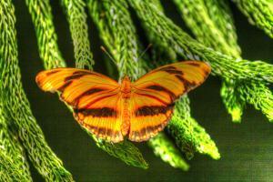 Butterfly 4 by Robert Goldwitz