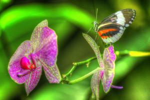 Butterfly 7 by Robert Goldwitz