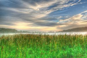 Cattails and Sky by Robert Goldwitz