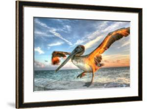 Dancing Pelican by Robert Goldwitz