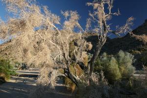 Desert Brilliance by Robert Goldwitz