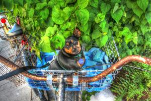 Dog in Basket by Robert Goldwitz