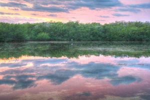 Heron and Mangroves by Robert Goldwitz