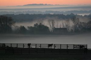 Horse Farm Rose Dawn by Robert Goldwitz
