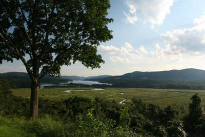 Hudson Highlands Tree Boscobell by Robert Goldwitz